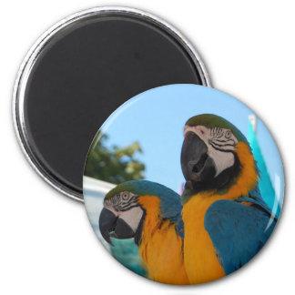 Macaw del azul y del oro imán redondo 5 cm