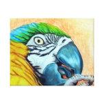 Macaw del azul y del oro impresion de lienzo