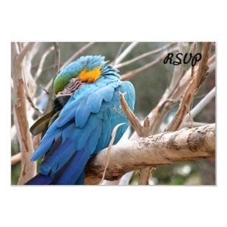 Macaw del azul y del oro invitación 8,9 x 12,7 cm