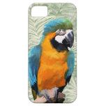 Macaw del azul y del oro iPhone 5 protectores