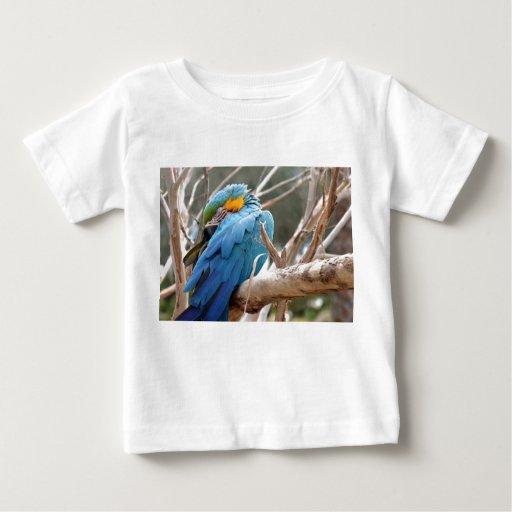 Macaw del azul y del oro playera
