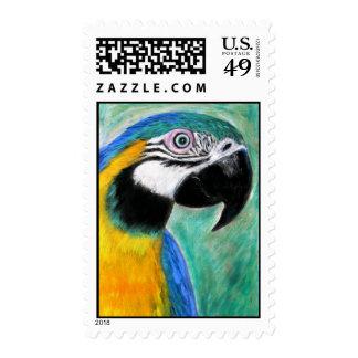 Macaw del azul y del oro envio