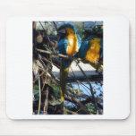 macaw del azul y del oro tapetes de ratón