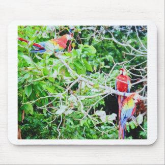 Macaw del escarlata alfombrilla de ratones