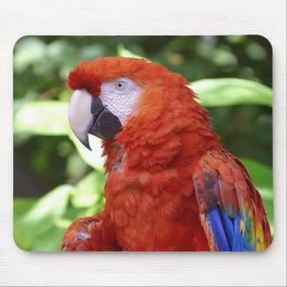 Macaw del escarlata alfombrillas de raton