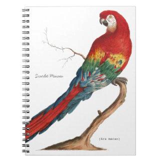 Macaw del escarlata, Ara Macao Libreta