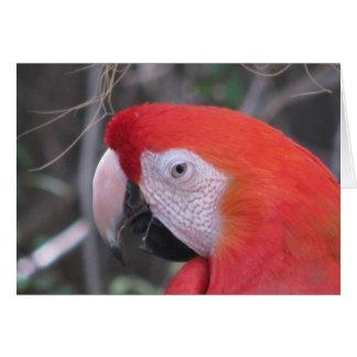 Macaw del escarlata - ascendente cercano tarjeta pequeña