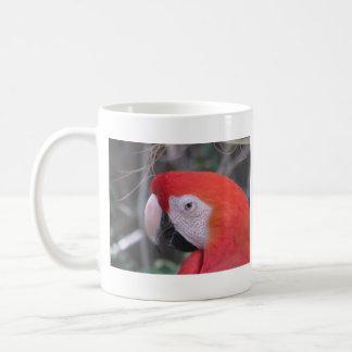 Macaw del escarlata - ascendente cercano taza