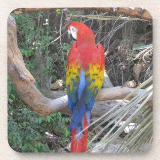 Macaw del escarlata - de la parte posterior posavasos