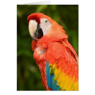 Macaw del escarlata del retrato tarjeta de felicitación