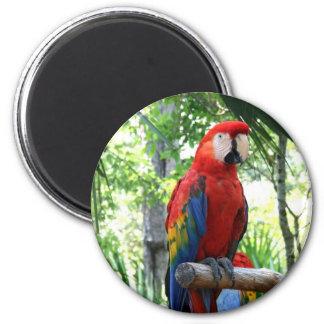 Macaw del escarlata, diseño rojo del photograp del imán