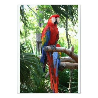 """Macaw del escarlata, diseño rojo del photograp del invitación 5"""" x 7"""""""