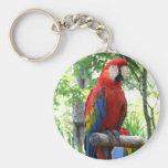 Macaw del escarlata, diseño rojo del photograp del llaveros personalizados