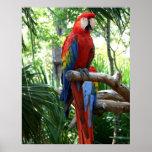 Macaw del escarlata, diseño rojo del photograp del impresiones