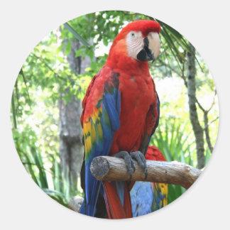 Macaw del escarlata, diseño rojo del photograp del pegatina redonda