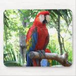Macaw del escarlata, diseño rojo del photograp del alfombrilla de raton