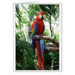 Macaw del escarlata, diseño rojo del photograp del tarjeton