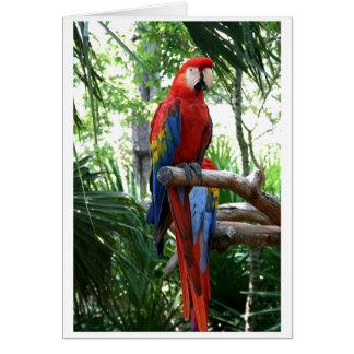 Macaw del escarlata, diseño rojo del photograp del tarjeta de felicitación
