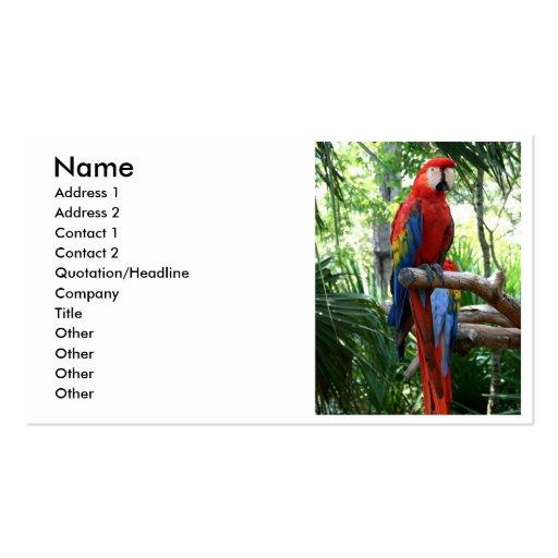 Macaw del escarlata, diseño rojo del photograp del tarjetas de visita