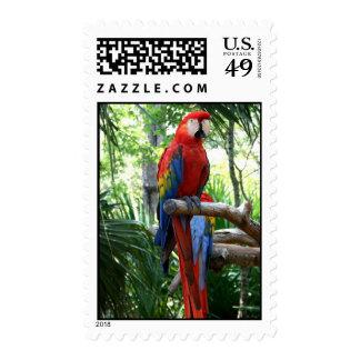 Macaw del escarlata, diseño rojo del photograp del timbre postal