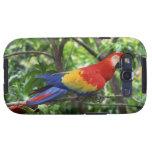 Macaw del escarlata en el miembro de árbol galaxy SIII protectores