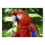 Macaw del escarlata felicitaciones