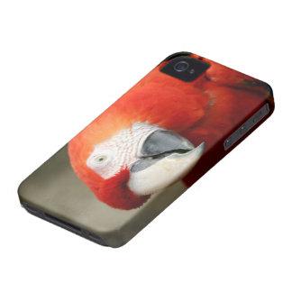 Macaw del escarlata Case-Mate iPhone 4 protectores