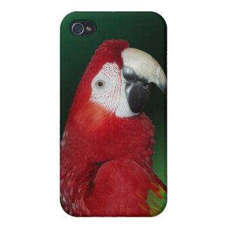Macaw del escarlata iPhone 4 protectores