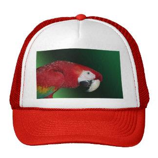 Macaw del escarlata gorro de camionero