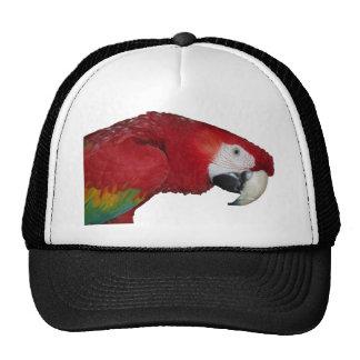 Macaw del escarlata gorros