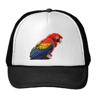 Macaw del escarlata gorra