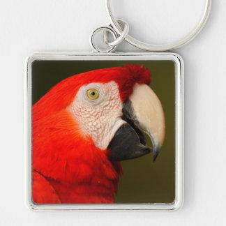 macaw del escarlata llavero
