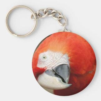 Macaw del escarlata llaveros personalizados