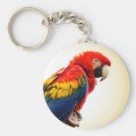 Macaw del escarlata llavero redondo tipo pin