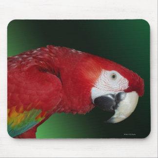 Macaw del escarlata mouse pads