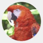 Macaw del escarlata pegatinas redondas