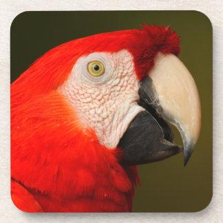 macaw del escarlata posavasos de bebida