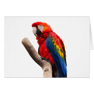 macaw del escarlata que espera mi llove felicitación