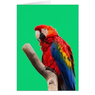 macaw del escarlata que espera mi llove felicitacion