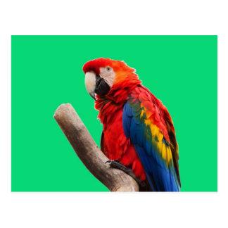 macaw del escarlata que espera mi llove postal