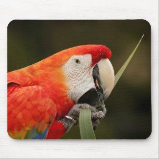 Macaw del escarlata que juega con la hoja tapete de ratón