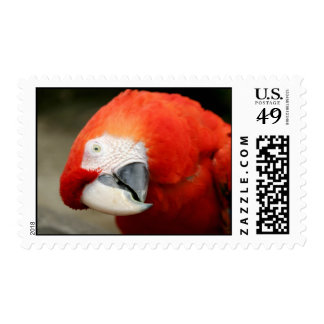 Macaw del escarlata sellos