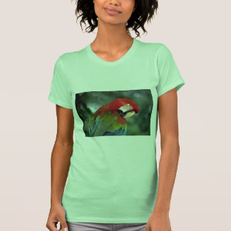 Macaw del escarlata Singapur Camisetas