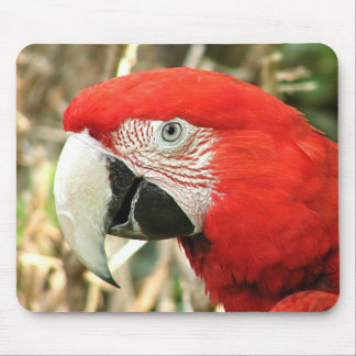Macaw del escarlata tapete de ratones