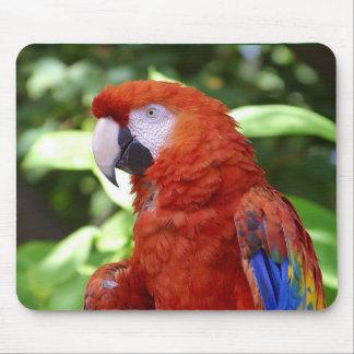 Macaw del escarlata alfombrillas de ratón