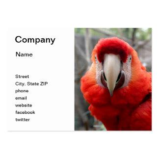 Macaw del escarlata tarjetas de visita grandes