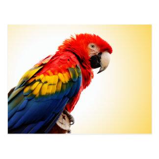 Macaw del escarlata tarjetas postales