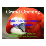 Macaw del escarlata tarjetones