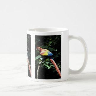Macaw del escarlata taza de café