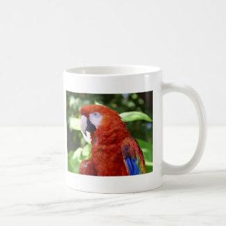 macaw del escarlata taza